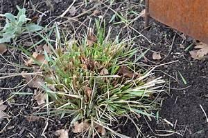Gräser Zurückschneiden Frühjahr : garten tipps pflanzenkotten heimann in emsdetten ~ Lizthompson.info Haus und Dekorationen