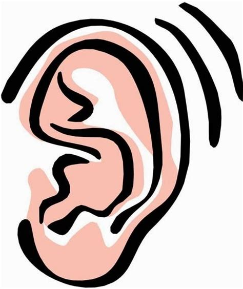 Ears Clipart Clipground