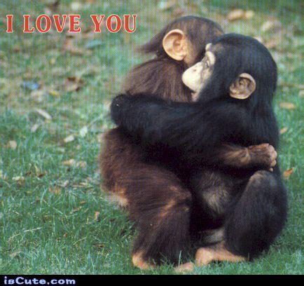 Chimp Meme - chimpanzee baby love iscute com