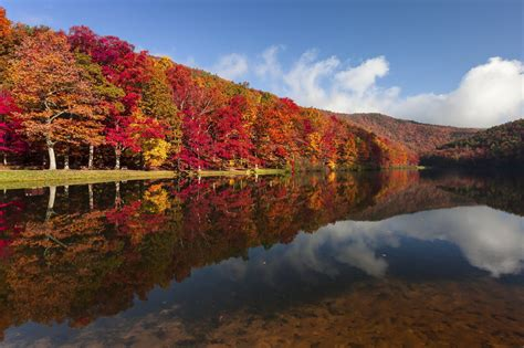 fall colors in virginia a guide to pennsylvania s fall foliage willow tree and