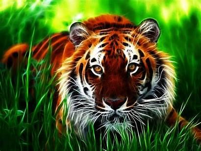 Tiger Wallpapers Tigres