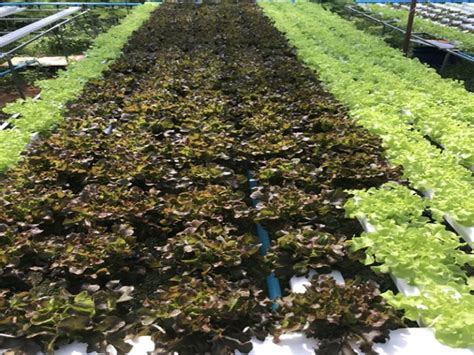 การปลูกพืชไร้ดิน - Hydroponic-SME จำหน่ายอุปกรณ์ ปลูกผัก ...