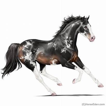 Horse Horseeden