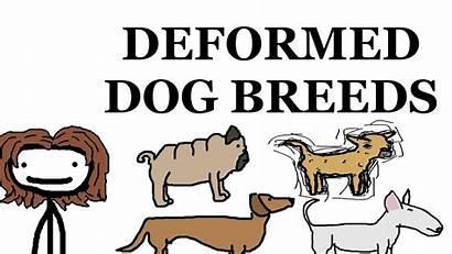 Dog Breed Deformities Worklad