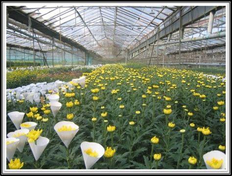 budidaya tanaman hias  teknik bunga potong