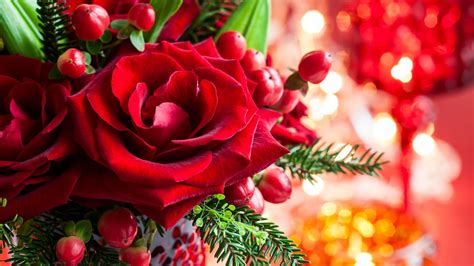 magic love bokeh roses merry rose christmas petals flower art hd blooms by bloy