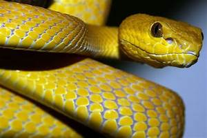 yellow mamba snake - Szukaj w Google | animals | Pinterest ...