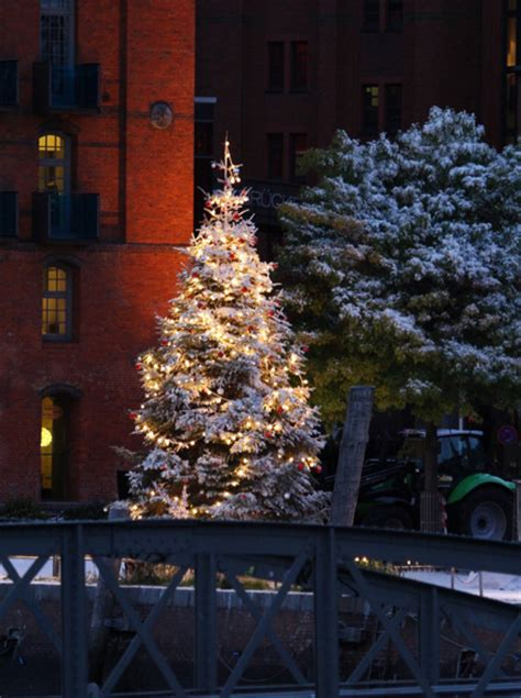 white christmas tree outdoor pictures   images