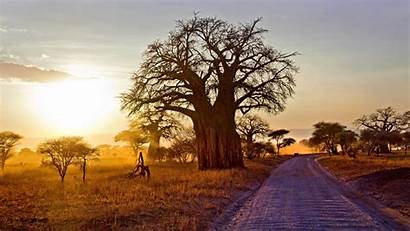 Baobab Landscape Sunrise Africa Background Nature Trees