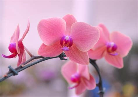 orquideas poesiafaclubecom