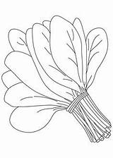 Spinach Clipart Vegetables Coloring Vegetable sketch template
