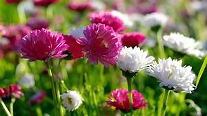 the most beautiful flowers in the world