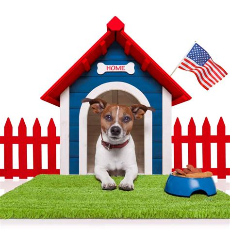 wireless dog fence reviews   electric