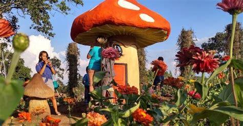 wisata taman bunga celosia bandungan sebuah perjalanan