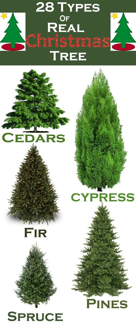 real xmas trees near me 28 types of real trees around the world