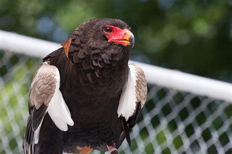 birds of prey 3714 flickr photo sharing