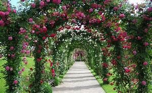 Rosen Für Rosenbogen : rosenbogen richtig aufstellen garten rosenbogen pflanzbogen ideen ~ Orissabook.com Haus und Dekorationen