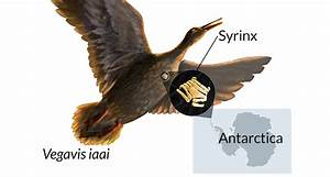 Birds U2019 Honks Filled Late Cretaceous Air