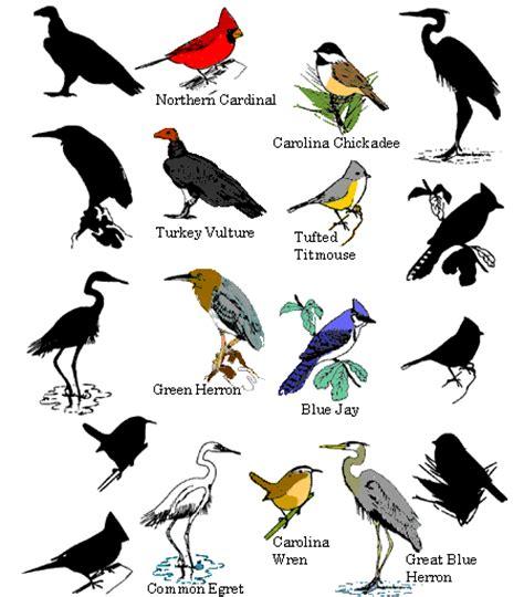 10 08 11 types of birds