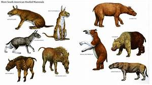 South American hoofed mammels,during the Miocene and ...