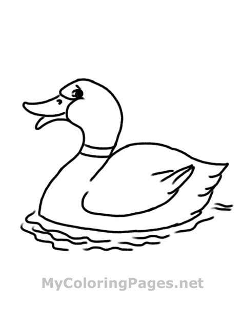 duck coloring pages  sun flower pages
