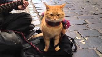 a cat named bob quot a cat named bob quot the big issue cat iphone 4s