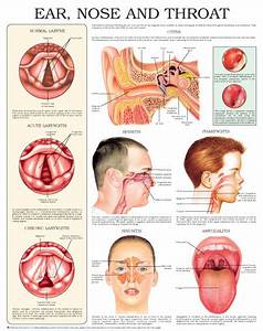 Ear Nose And Throat Diagram