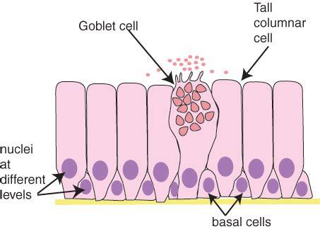histology guide epithelia