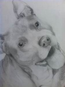 Pit Bull Terrier Pencil Drawing Wip By Xmush Kennelsx ...