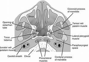 Nasopharynx | Radiology Key