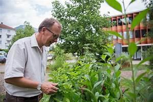 Visite du nouvel espace médiéval du jardin de plantes médicinales Dominique Villars Place Gre'net