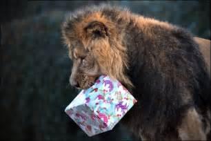 christmas in zoo fun news