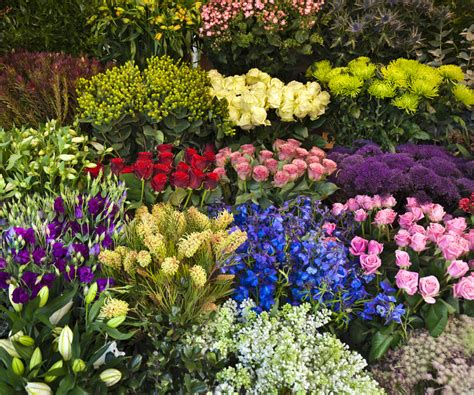 what to plant with roses about field of flowers wholesale