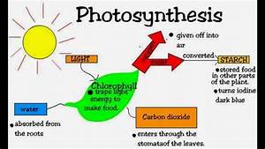 Photosynthesis  Biology  Form 4