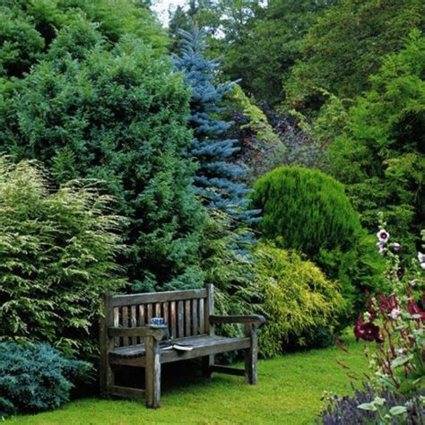 privacy planting ideas evergreen privacy hedge nice color and textural contrasts home garden ideas pinterest