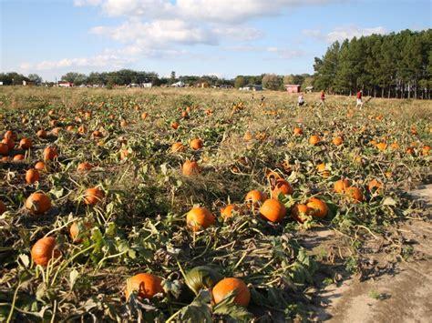 crossville tile distributors mn 100 best atlanta pumpkin patch pumpkin