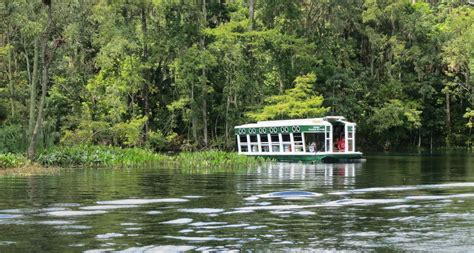 Silver Springs Glass Bottom Boat by Silver Springs State Park At Ocala Florida