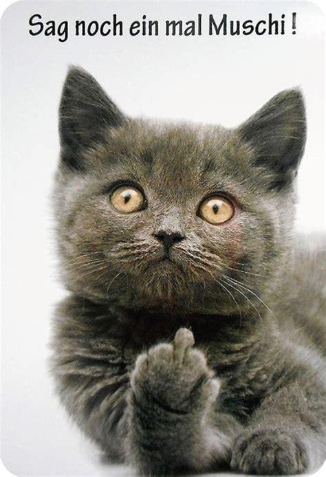 blechschild spruch sag noch ein mal muschi katze