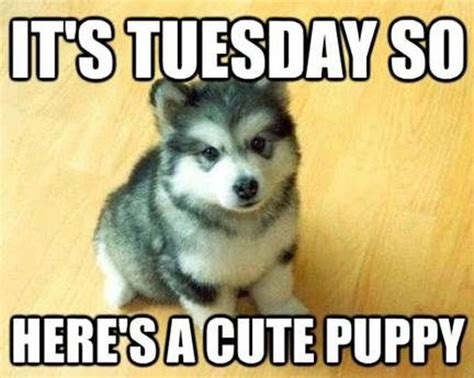 Tuesday Memes Funny - tuesday meme funny happy tuesday pictures