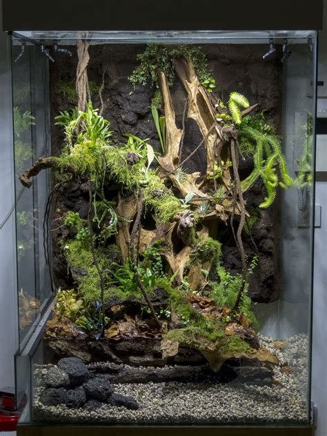 img paluvivarium reptile terrarium reptile