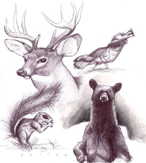 drawing ideas images  pinterest animal