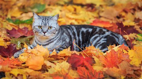 Fall Animal Wallpaper - leaves fall animals cat wallpapers hd desktop and