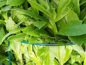 Was Brauchen Pflanzen Zum Wachsen : minutentipp f r den garten pflanzen st tzen aber richtig ~ Frokenaadalensverden.com Haus und Dekorationen