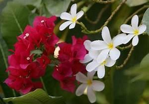 Blumen Im Garten : blumen im garten des hotels atlantis th jens kalaene als kunstdruck oder handgemaltes gem lde ~ Bigdaddyawards.com Haus und Dekorationen
