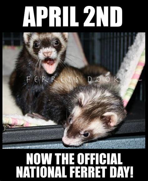 Ferret Meme - 489 best animal memes images on pinterest