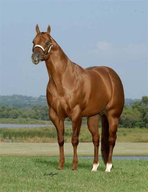horse horses quarter palomino boyfriend natural american