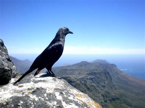 painting  bird  mountaintop  stock photo public