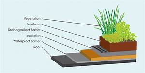 Green Roofs  A Sustainable Design