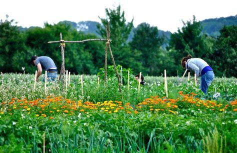 Garten Mieten Leverkusen by Meine Ernte Gem 252 Seg 228 Rten Zum Mieten Leverkusen