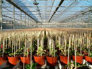 Bamboo Sticks For Pot Plants